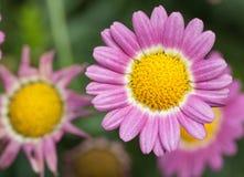 piękny kwiat się blisko Obraz Stock