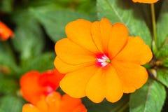 piękny kwiat się blisko Fotografia Royalty Free