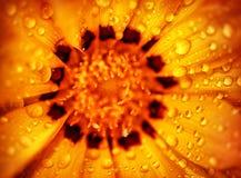 piękny kwiat tło Fotografia Royalty Free