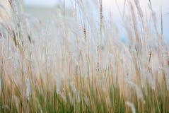 Piękny kwiat trawy tło Obrazy Royalty Free