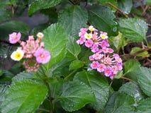 Piękny kwiat w ogródzie w Storkow w Niemcy zdjęcia stock