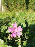 Piękny kwiat w opóźnionej jesieni fotografia stock