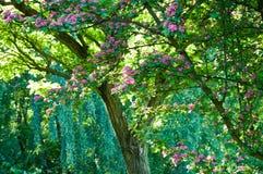 Kwiatonośny drzewo fotografia royalty free