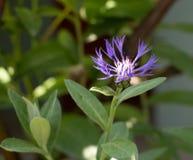 piękny kwiatu dorośnięcie w flowerbed, prezent urodzinowy obraz stock