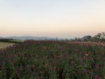 Piękny kwiatu ogród wewnątrz obrazy royalty free