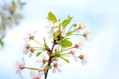 Piękny kwiatu okwitnięcie Obraz Stock