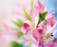 Piękny kwiatu tło Obrazy Stock