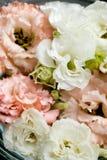 Piękny kwiatu tło dla kart obraz royalty free