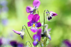 Piękny kwiatu zbliżenie z plamy tłem Zdjęcia Royalty Free