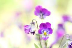 Piękny kwiatu zbliżenie z plamy tłem Zdjęcie Royalty Free