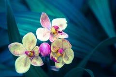 Piękny kwiatu, zieleń liścia tło w kwiatu ogródzie przy pogodnym dniem i Zdjęcie Stock