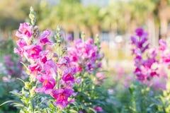 Piękny kwiatu, zieleń liścia tło w kwiatu ogródzie przy pogodnym dniem i Fotografia Stock