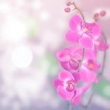 Piękny kwiecisty abstrakcjonistyczny tło, odosobnione orchidee Obraz Royalty Free