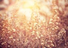 Piękny kwiecisty pole fotografia stock