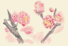 Piękny kwiecisty tło Fotografia Stock