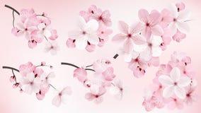 Piękny kwitnie zmrok i światło - różowy Sakura kwitnie Set realistyczne kwiatonośne cerry gałąź również zwrócić corel ilustracji  ilustracja wektor