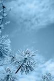 Piękny lód glazurujący drzewa po zimy burzy Obraz Stock