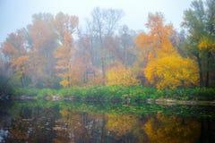 piękny las jesieni Obrazy Royalty Free