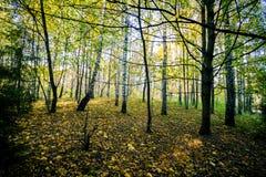piękny las jesieni zdjęcie stock