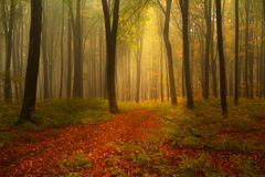 Piękny las podczas jesieni Fotografia Stock