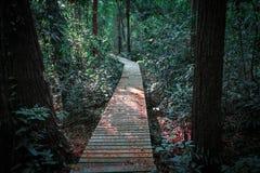 Piękny las przy natura śladami zdjęcia royalty free