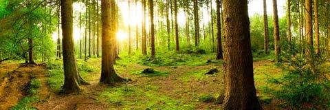 Piękny las przy wschodem słońca Zdjęcia Royalty Free
