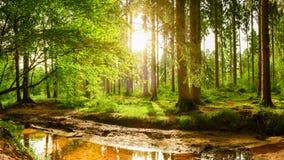 Piękny las przy wschodem słońca Obraz Royalty Free