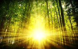 piękny las słońca Fotografia Stock