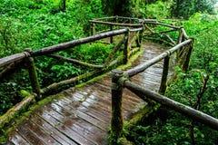 Piękny las tropikalny przy ang ka natury śladem Zdjęcie Royalty Free