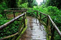 Piękny las tropikalny przy ang ka natury śladem Obrazy Royalty Free