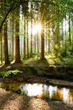 Piękny las w wiośnie obraz stock