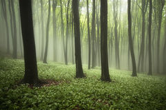 Piękny las w wiośnie z mgłą, zielonymi roślinami i kwiatami, obrazy royalty free