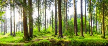 Piękny las z jaskrawym światłem słonecznym w tle obraz stock