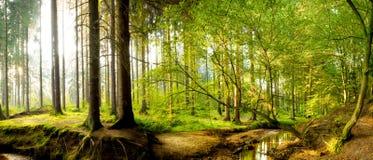 Piękny las z jaskrawym słońcem fotografia stock
