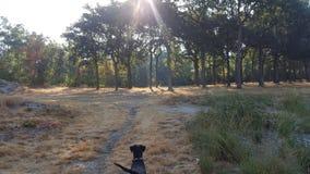 Piękny las z słońca jaśnieniem i awanturniczym psem fotografia stock