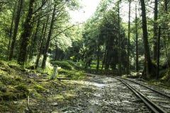 Piękny las z zaniechaną koleją Zdjęcie Stock