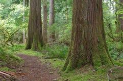 piękny lasowy Pacific obrazy royalty free