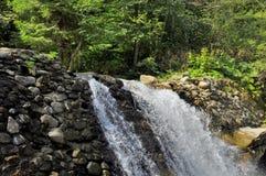 Piękny lasu strumień, siklawa w lecie i Obrazy Royalty Free