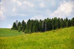 Piękny lato krajobraz z polem i kwiatami Zielony krajobraz zaświecał słońcem przy zmierzchem europejczycy obraz royalty free