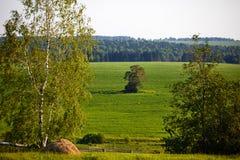 Piękny lato krajobraz z polem i kwiatami Zielony krajobraz zaświecał słońcem przy zmierzchem europejczycy obrazy stock