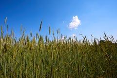 Piękny lato krajobraz z polem i kwiatami Zielony krajobraz zaświecał słońcem przy zmierzchem europejczycy fotografia stock