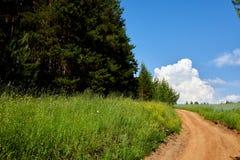 Piękny lato krajobraz z polem i kwiatami Zielony krajobraz zaświecał słońcem przy zmierzchem europejczycy zdjęcie royalty free