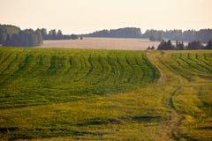 Piękny lato krajobraz z polem i kwiatami Zielony krajobraz zaświecał słońcem przy zmierzchem europejczycy obraz stock