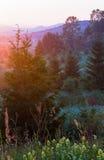 Lato krajobraz z wildflowers Obrazy Royalty Free