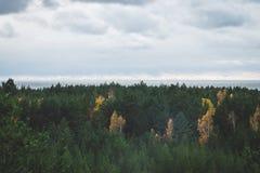 Piękny Latvian las w Październiku Fotografia Stock