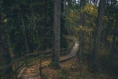 Piękny Latvian las w Październiku Zdjęcie Stock