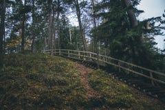 Piękny Latvian las w Październiku Zdjęcia Royalty Free