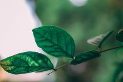 Piękny liścia tło z Płytką głębią pole Zdjęcie Stock