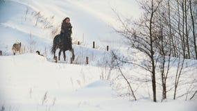 Piękny longhaired żeński jeździec jedzie czarnego konia przez śniegu wzdłuż ścieżki, psy biega w pobliżu zbiory