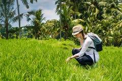 Piękny młoda dziewczyna podróżnik w kapeluszu, szkła, z plecakiem siedzi na ryżu polu w wysokiej zielonej trawie z palmami, Bali zdjęcia royalty free